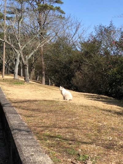 深山公園猫様